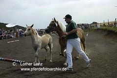 280705 (1) (Lothar Lenz) Tags: horse caballo cheval cavallo cavalo pferd hest equus paard haflinger hst fohlen hestur konj hobu zirgs lotharlenz equidenpass