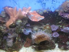 Coral Reef Stuff