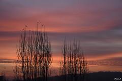 Lever de soleil - Sunrise (baladeson) Tags: leverdesoleil sunrise nuage ciel calme paysage arbre horizon