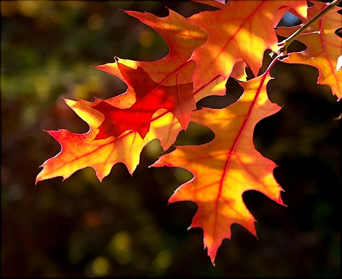 Bye, Bye, Autumn by algo.