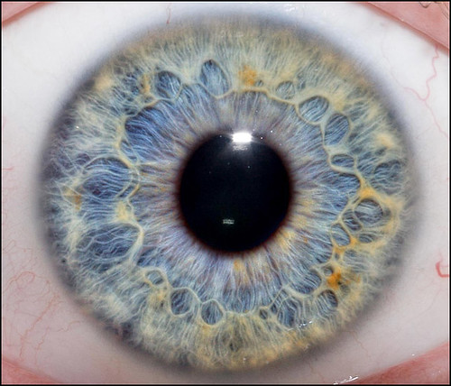 close-up of the human eye with all its colors and design