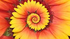 Recursive Blanket Flower - by gadl