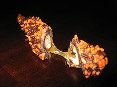 Close-up of Craftique Sweetzel (The Craftique Creations & Promotions) Tags: party dark candy chocolate custom chocolatedipped favor pretzel jimmies sprinkes chocolatecoveredpretzels craftique thecraftique halloweensweetzels darkchocolatepretzel halloweenpretzel