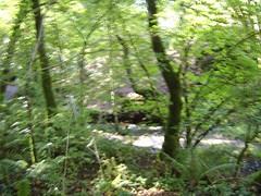 October 2006026 (helena8352) Tags: park walk balloch aiutumn