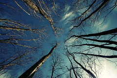 up up up up up up (puja) Tags: seattle trees sky topf25 clouds 350d topf50 topf75 wideangle topf300 canondigitalrebel topf150 topf100 topf200 goldengardens sigma1020 tenpositive