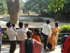 pervertss!! leave me alone while i take a skinny dip!! sheeesh (FrogStarB) Tags: life india public animal zoo wildlife captured prison rhino bombay mumbai ranibaug cagedwildlife bloodyshame