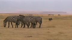 safari011