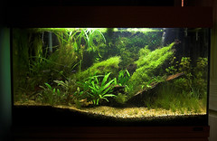 my planted aquarium (Stu Worrall Photography) Tags: fish aquarium tank cardinal gas co2 planted tetras riccia stuworrall stuartworrall