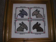 """Tapirs of The World"" Cross Stitch (skoop102) Tags: world park mountain art animal zoo design crossstitch cross stitch framed sewing wildlife malayan sew safari cotton frame stitching brazilian species material stitched tapir safaripark zoos sewn threads designed wildlifepark bairds crossstitching tapirs crossstitcher tapirus tapirsoftheworld"