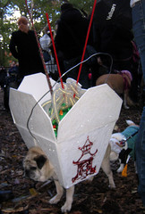 chinese takeout pug (istolethetv) Tags: nyc dog eastvillage newyork halloween photo foto image lowereastside snapshot picture pug halloweencostume photograph pooch   halloweendogs tompkinssquare dogsincostumes dogcostume halloweendogparade tompkinssquareparkdogparade newyorkdogs eastvillagedogparade tompkinssquaredogparade canetravestito caneincostume halloweencostumesfordogs
