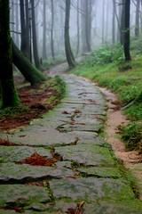 Depth of Mist Wood
