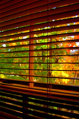 (*April*) Tags: autumn tree bedroom view blinds instantfave wdyw 3taw2