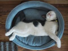 Paradiso! (kekyrex) Tags: cats pets animals kittens