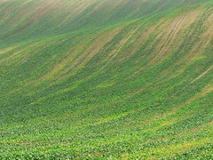 Massive Green Waves (sonofsteppe) Tags: autumn brown plant green field landscape countryside hungary finding outdoor country hill wave ground hike explore dirt valley land exploration hilly minimalist cultivated sonofsteppe pusztafia somodorpuszta szomor