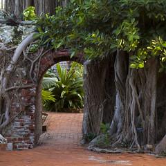 Doorway (bentilden) Tags: door usa tree overgrown garden pentax florida keywest istdl