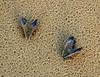 Loving the rain (~Glen B~) Tags: stilllife shells love beach muscles sand heart nikond70 tamron28300mm bbok satelliteportfolio