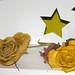 Stella Roses