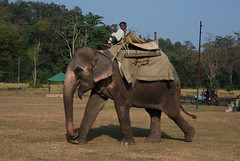 Want to ride ? (whitespikedevil) Tags: india elephant cornac