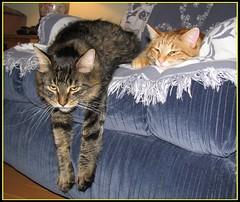 Grey Cup Party Gone Bad... (BakkoBrats) Tags: pet cats animal cat feline tabby adorable tj skeeter blacktabby mediumhair mainecoonish abigfave bornjune282005 20061117 impressedbeauty 12from2006