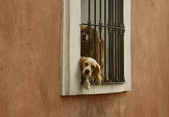 Hola! (Jesus Guzman-Moya) Tags: dogs window mxico mexico ventana interestingness perros puebla babel ilmuro interestingness279 i500 500i sonycybershotdscr1 chuchogm explore19nov06 jessguzmnmoya