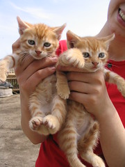2 pisici/ 2 kittens ({Ema}) Tags: cats kittens kittie ninelives pisici furrycat
