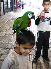 "parrot chilling on head • <a style=""font-size:0.8em;"" href=""http://www.flickr.com/photos/70272381@N00/304630776/"" target=""_blank"">View on Flickr</a>"