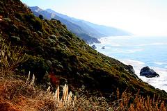 IMG_0809 (Sam's Exotic Travels) Tags: ocean california plant beach nature coast highwayone moss weed highway rocks sam pacific scenic coastline sams hwy1 travelphotos samsays samsexotictravelphotos exotictravelphotos samsayscom