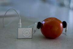 ketchup no. 24