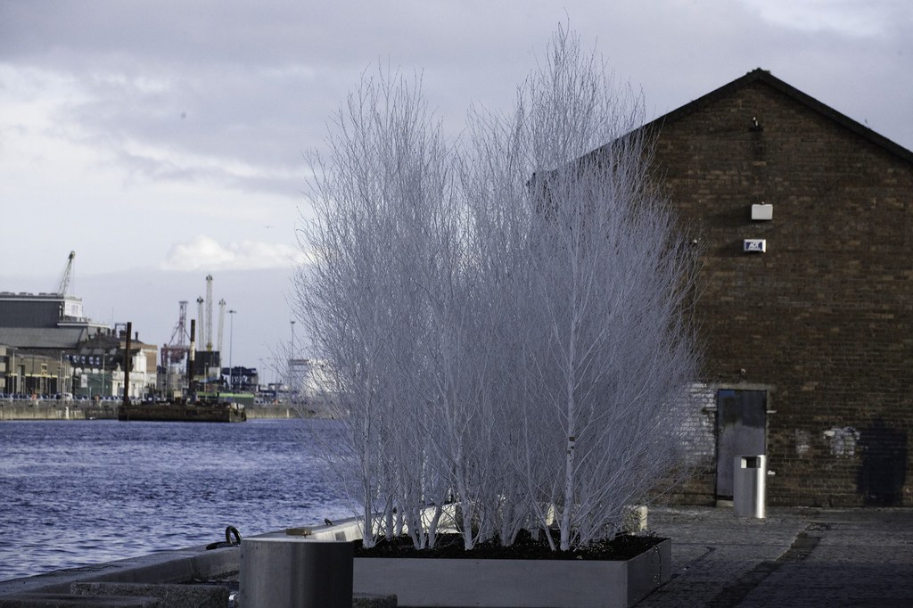 Christmas Trees In Dublin Docklands