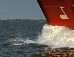 High Note (OneEighteen) Tags: sea port harbor marine bravo ship dolphin houston pilot porpoise