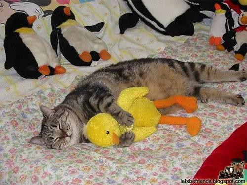 Animals in Love - Kitten and Toy Duck