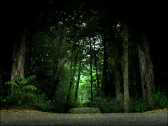 Pathway (ilina s) Tags: trees light summer green fall nature forest dark day path mysterious pathway ilinas