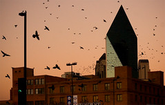The Birds (Justin Terveen) Tags: city sunset urban bird station birds architecture buildings dallas downtown dart ninjatune westend swivel tuf urbanfabric justinterveen wwwtheurbanfabriccom theurbanfabric urbanfabricphotography