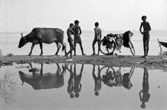 India, Varanasi, Gange (luca marella) Tags: people blackandwhite bw india white black reflection river children cow photo blackwhite reflex bicicleta pb bn e varanasi bathing bianco nero ganga benares riflesso gange marella marellaluca onthetrailofbresson thelanguageofphotogaphy