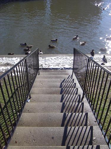 stairway to duckville