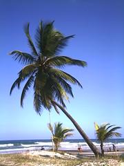 O Coqueiro Inclinado em 2007 (Joe Edman) Tags: praia frias coqueiro paisagens 2007 serragrande