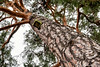 DSC_5041-Edit.jpg (marius.vochin) Tags: groundup winter nature hiking rind outdoor receiding tree cold snow vaxholm stockholmslän sweden se
