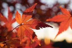 PC105665.jpg (plasticskin2001) Tags: leaf