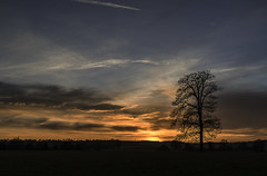 48/52: My favourite tree (judi may) Tags: 52weekchallenge 52in52 tree silhouette sunset sky clouds hitchin hertfordshire field canon7d