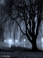 Night Willow (markofphotography) Tags: winter blackandwhite bw mist snow tree silhouette fog wisconsin night contrast nightshot branches nighttime willow milwaukee personalfavorite willowtree nighthawks stumble stumbleupon veteransmemorialpark juneauparklagoon milwaukeenights markofphotography markchristiancullen markofphotographyimagekindcom