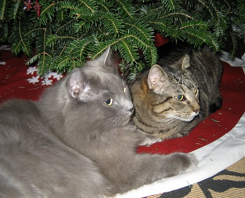 kitties under the tree