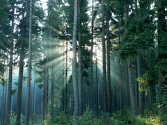 Misty Morning at the Ochsenkopf Slopes (Andreas Helke) Tags: trees sun mist tree green nature topv111 backlight forest germany landscape deutschland woods topv333 europa europe topv1111 gimp fav20 utata fav portfolio lm popular topv11111 wald spruce twa fichte toprint mypopularphotos fav10 fichtelgebirge ochsenkopf candreashelke fav100 fav200 pi1 interestingness72 worldsfavorite i500 v10000 20061214282nogroups pi5 20061218684nogroups 2006122024817 2006122327319 explorepotential donothide 0207top10 2007021254427 2007032678731 oldstileoriginalsecret 20070616118640 20070810152150 20071227306079 200811188433156 fav5andmore fav2andmore popularold 2010071910207177 8invitationsaccepted candreashelke2 mymoreinterestingphotos gotnoticedagain