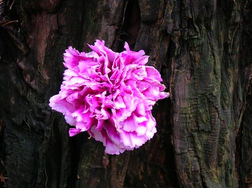 bark and flower