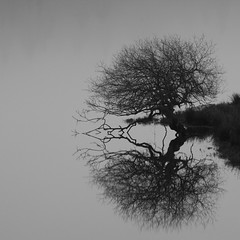 The Trossachs, Scotland (dhansak79) Tags: bw reflection tree 350d scotland loch trossachs 70200f4l scoopt