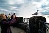 birdfalls.jpg (shveckle) Tags: canada man color bird nycpb niagarafalls weird seagull streetphotography falls gothamist wechsler shveckle wnwthebirds