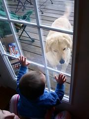 Nathan wants a dog