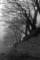 Winter Fog (Stuart Pearson Photoelectric) Tags: trees ireland winter blackandwhite monochrome weather fog landscape aperture nef availablelight blackrock diffusedlight views200 favourites5 nikond80 sigma1770mmdc