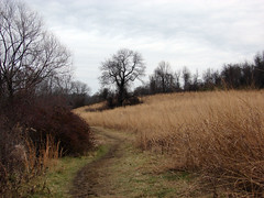Lakeside Path (AlbinoFlea) Tags: tree grass pennsylvania path dry marshcreeklake