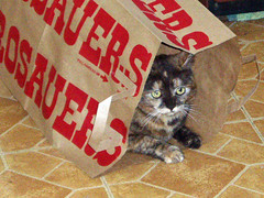 Disappointed (Glenn Harris (Clintriter)) Tags: pets cute cat bag disappointed tortie cc200 cc100 abigfave