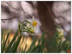 Flower 070108 #03